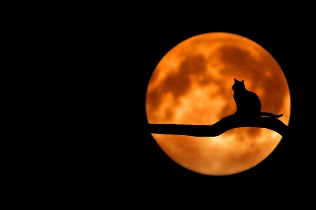 El gato deSara
